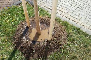 Vyvýšená závlahová mísa udrží zálivku, která se tak nerozlije po okolní půdě.