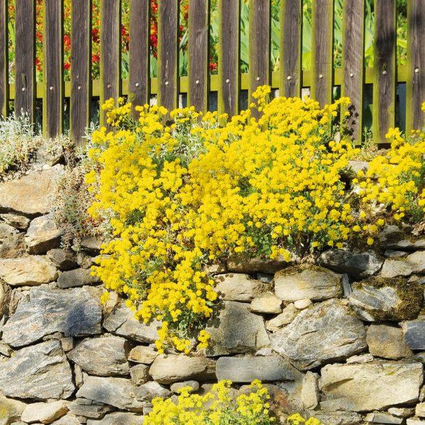Osázené suché zídky budou ozdobou zejména venkovských stavení, ale jsou ipraktickou součástí jakékoliv zahrady. FOTO ISTOCK