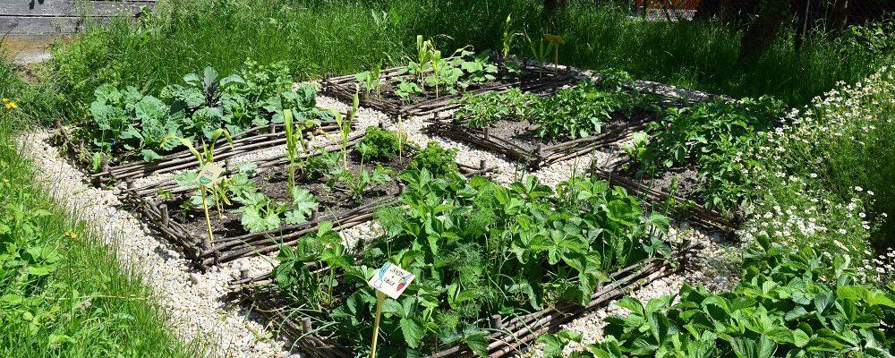 Polykulturní nebo monokulturní pěstování zeleniny?