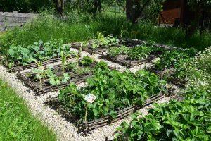 Do polykulturního záhonu kromě zeleniny vysazujeme i bylinky a jiné pro ostatní plodiny prospěšné rostliny. foto: Lucie Peukertová