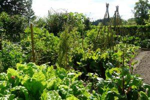Každý způsob pěstování má své výhody i negativa. foto: Lucie Peukertová