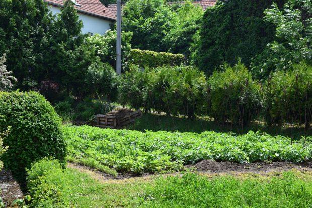 Monokulturní pěstování je vhodné hlavně pro ty plodiny, které se do polykultury nehodí nebo jich potřebujete větší množství. foto: Lucie Peukertová