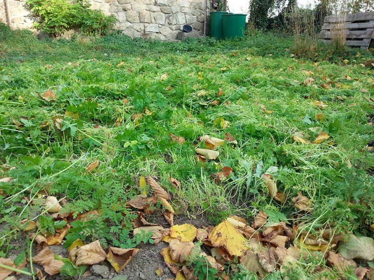 Ekologické náhrady hnojiv, které udělají vaší zahradě dobře