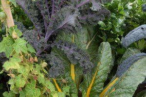 Různé druhy zeleniny rostoucí vedle sebe půdu příliš nezatěžují. foto: Lucie Peukertová