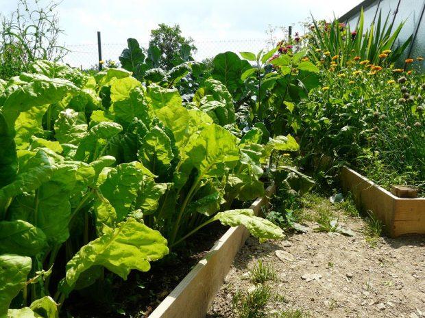 Zeleninu lze pěstovat i v plošně malé monokultuře, zátěž půdy není pak tak výrazná. foto: Lucie Peukertová