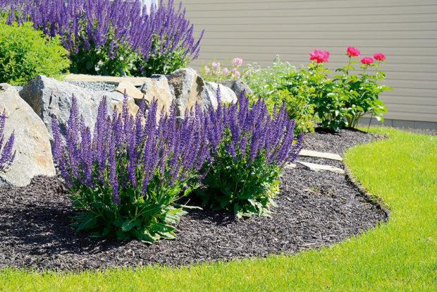 okrasní zahrada