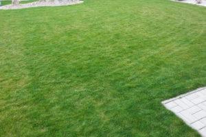 mapy na trávniku