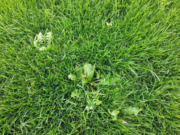 zelený trávnik