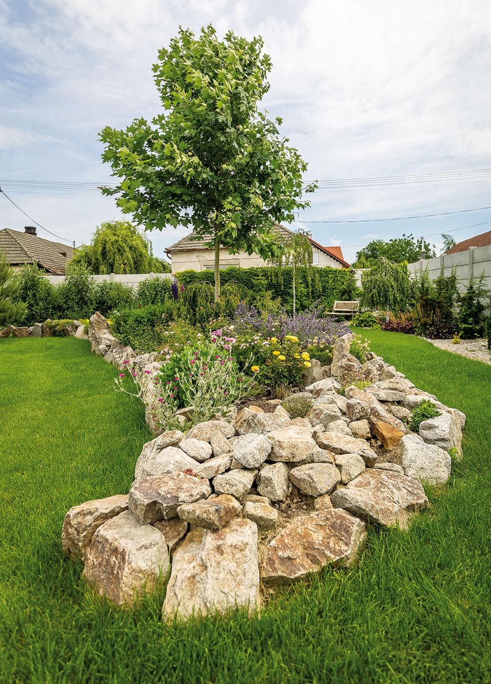 Mladý platan má čestné místo vcentrální části zahrady, kde má dostatek prostoru kzdravému růstu. Vdospělosti bude nádhernou dominantou. Kolem něj se vine dlouhý trvalkový záhon svelkým množstvím různých květin, půdopokryvných dřevin akeřů nízkého vzrůstu. FOTO MIRO POCHYBA