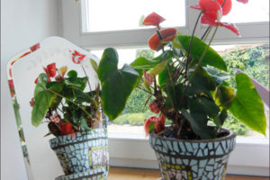 kvety na okne