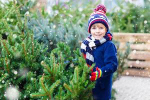 Jak si vybrat živý vánoční stromek a jak se o něj starat, aby vydržel co nejdéle?