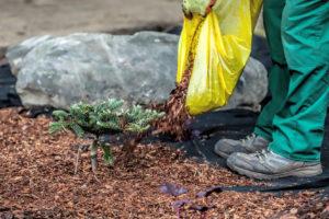 Pět důvodů, proč mulčovat půdu