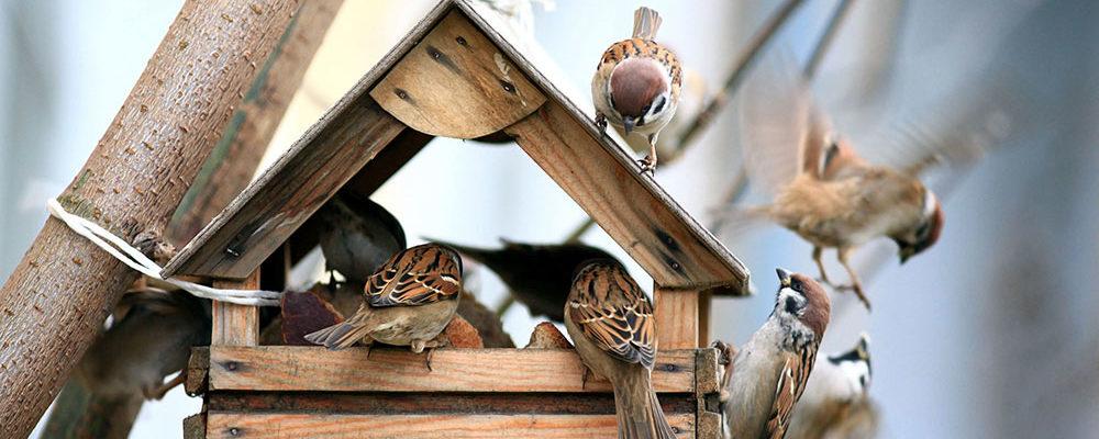 Připravte ptáčkům v zahradě krmítko se zdravou vyváženou potravou