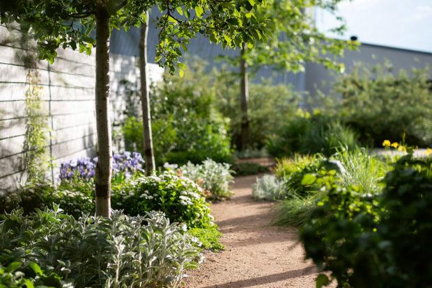 záhrada v roce 2020