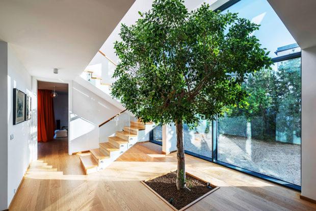 Strom přímo v interiéru