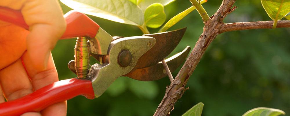 Jaké práce v květinové zahradě vás čekají nejdříve?