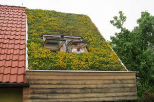 Vegetační střecha po třech letech od realizace,