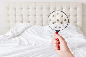 Jak odstranit množství mikroorganismů z naší postele a zabránit jejich tvorbě?