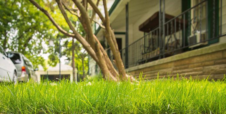Založte si nový trávník: Je lepší klasický výsev anebo koberec?