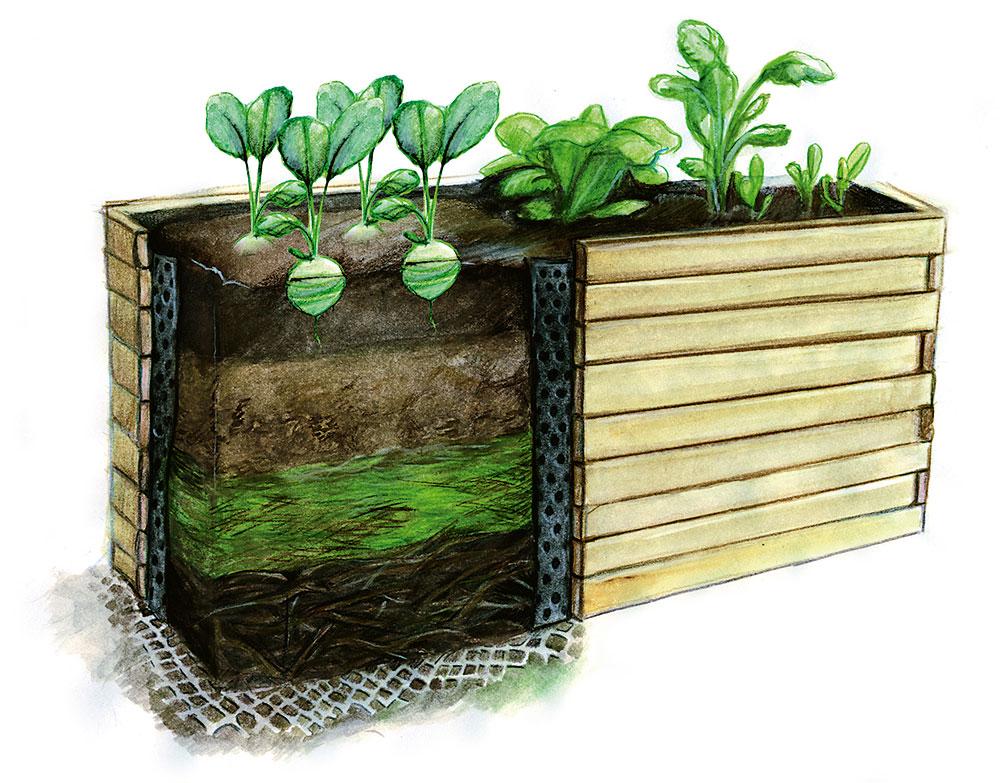 Záhon si postupem času kvůli rozkladu organické hmoty sedá aubývají vněm živiny. Proto je nutné do něj průběžně doplňovat kompost ipůdu. Nezapomínejte na nejdůležitější pravidlo: do záhonu nešlapeme aneokopáváme ho. Obracení půdy stačí ke zničení mikroorganismů, které se dostanou na světlo izahubení těch zpovrchu. Foto: ISIFA / Shutterstock