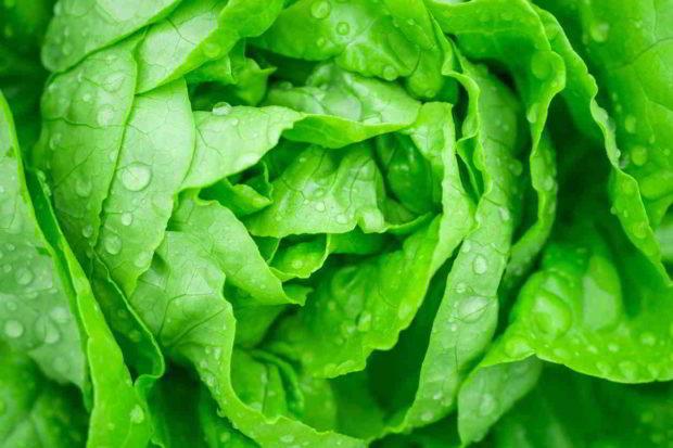 hlávkovy salát