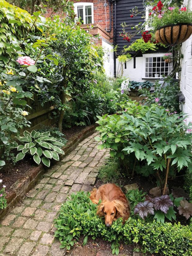 pes v zahrade