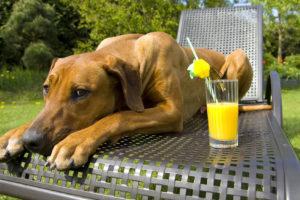 Pes na zahradě aneb Jak zachránit cibule