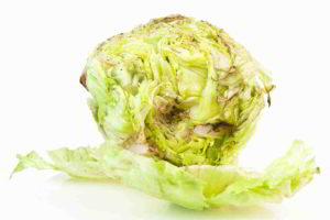 Bakteriální hniloba salátu