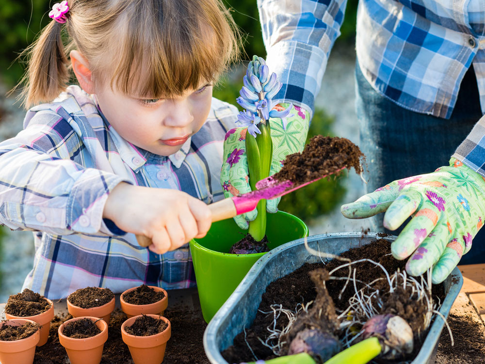 Co potřebujete vědět, když chcete vypěstovat květiny a bylinky ze semínek?