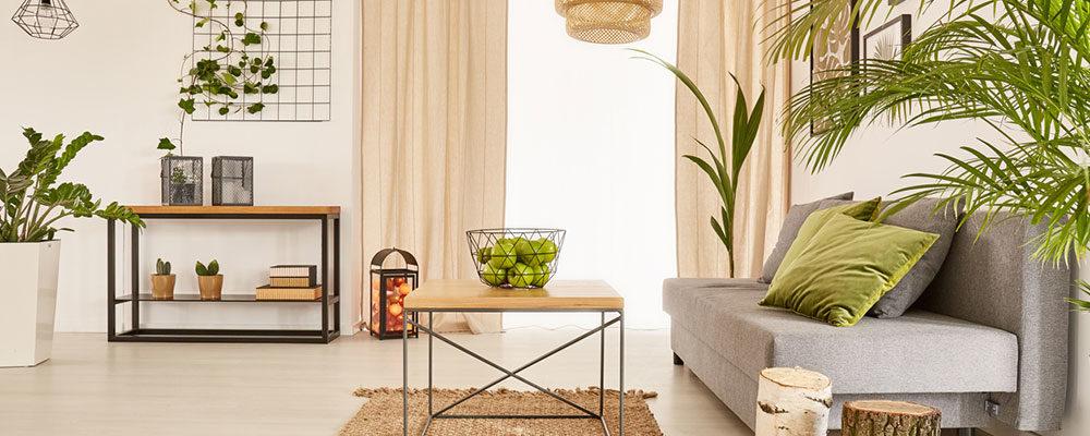 Nejhorší a nejlepší interiérové rostliny podle feng-šuej. Máte je doma i vy?