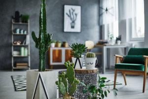 interiérové rostliny