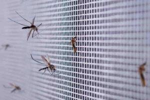 Jak vyčistit pevné síťky proti hmyzu
