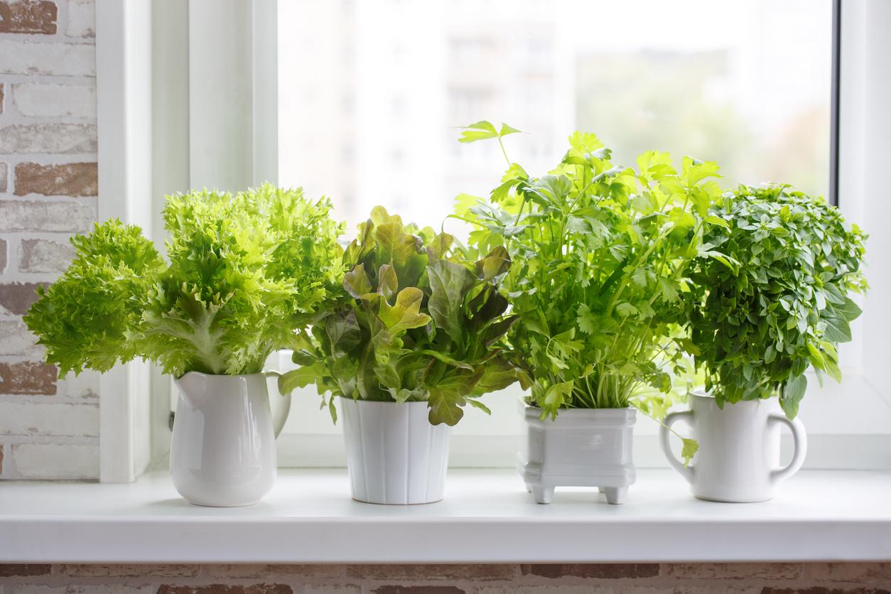 Rostliny na okenních parapetech