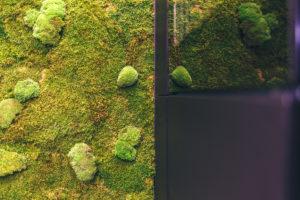 Zelená stěna z mechu