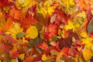 Tapeta podzim
