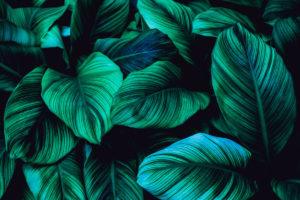 Tapeta tropické potisky a exotika