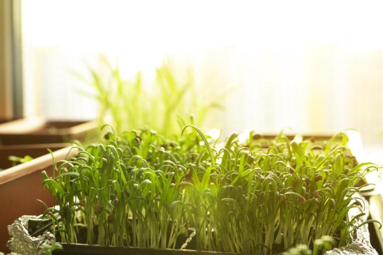 Vše o brzkém výsevu: 8 rostlin, které můžeme sít už v lednu