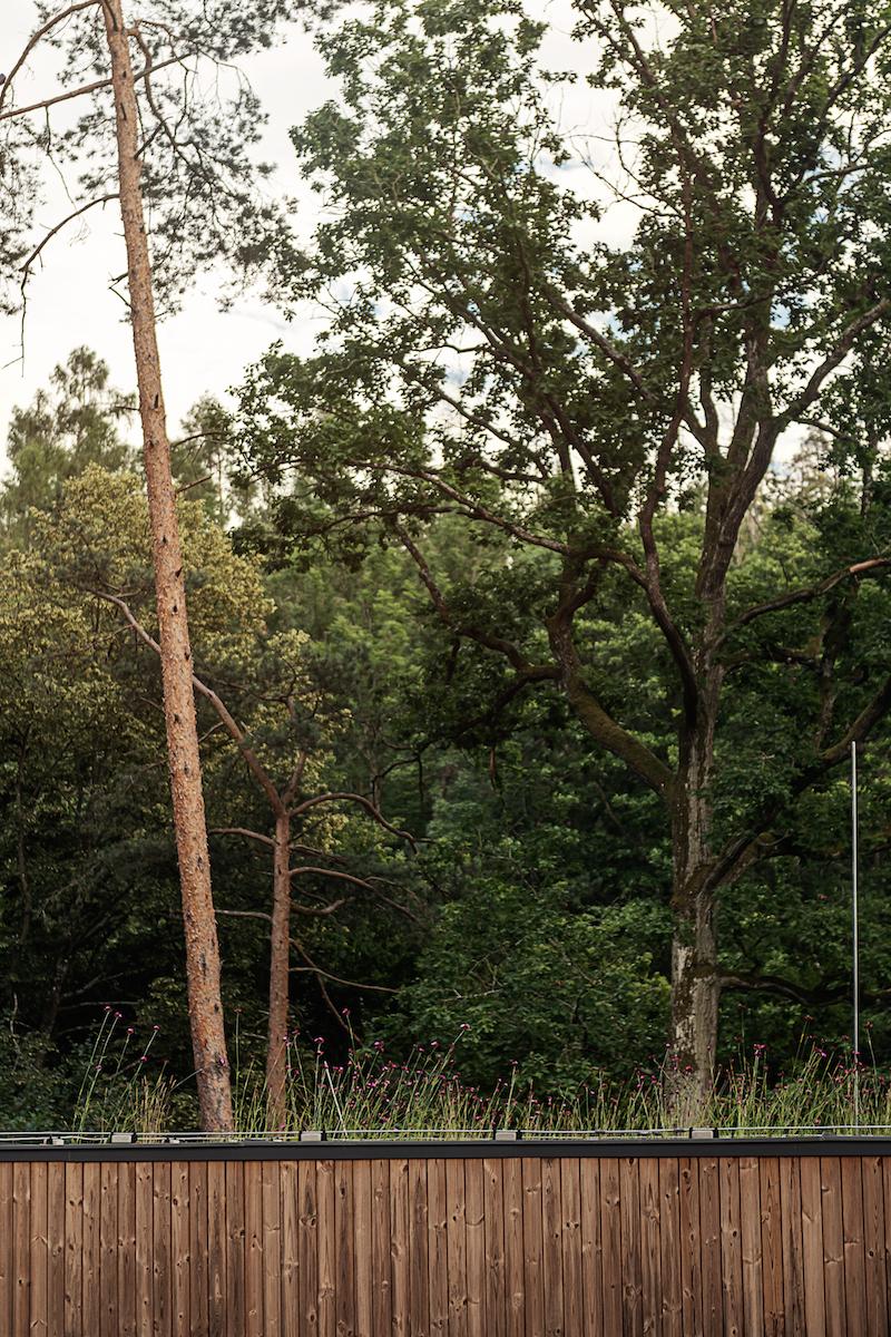 Dum v lese21