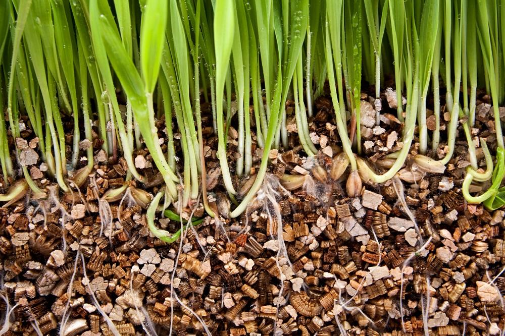 Klíčící tráva a vermikulit