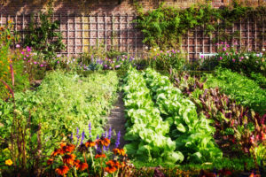 Zahrada se zeleninou