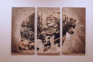 Obraz medvěda