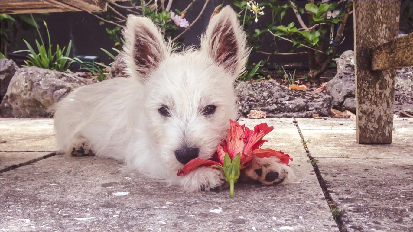 Pes s květinou