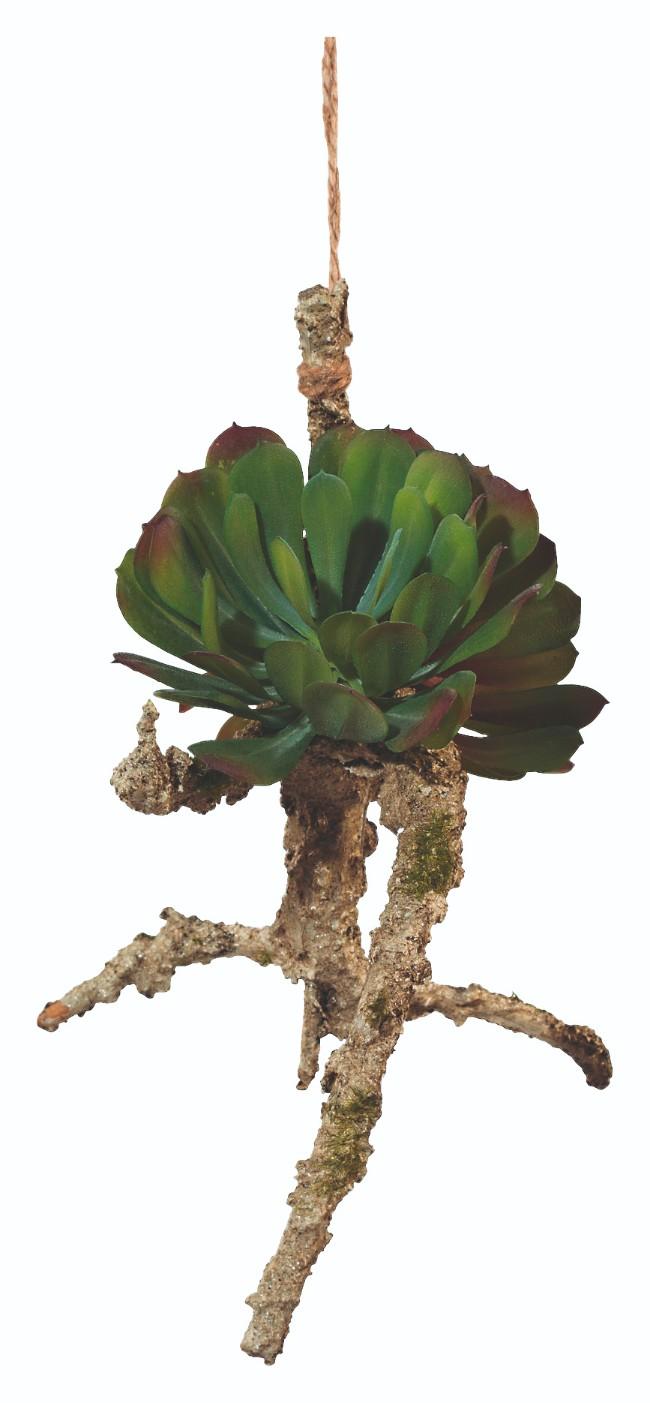 101_rastlina