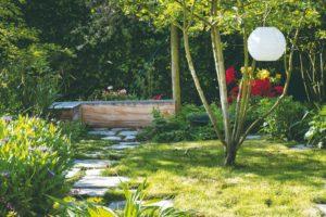Vícekmenná dřevina v zahradě