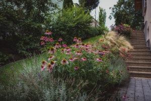 Kvetoucí trvalky v zahradě