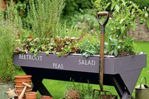 Pěstování zeleniny ve vyvýšeném květináči