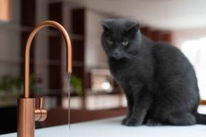 Měděné vodovodní baterie a kočka