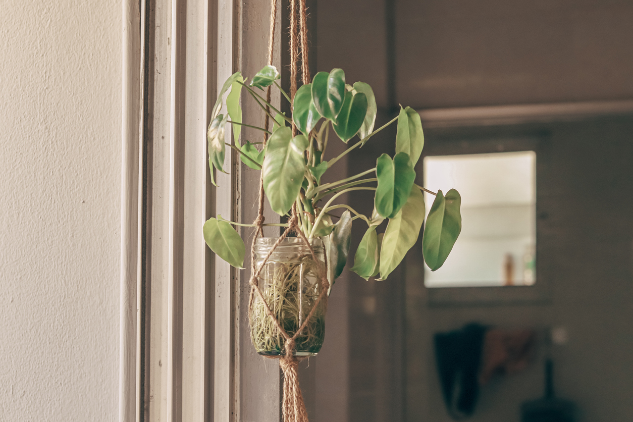 Relaxing home space using houseplant