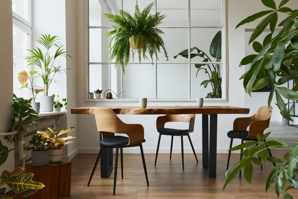 6 interiérových rostlin, které zkrášlí vaši kuchyň a nejsou náročné na údržbu