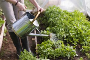 Polévání zahrady krhličkou